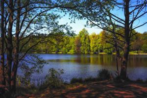 Фотографии Осенние Леса Озеро Деревья