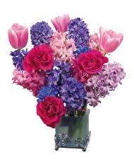 Фотография Букеты Розы Гиацинты Тюльпаны Белый фон Ваза Цветы
