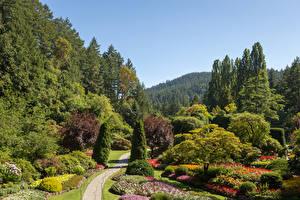 Картинки Канада Сады Дизайн Кусты Деревья Buchart Gardens Природа