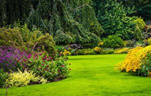 Фотографии Канада Парки Ванкувер Газон Кусты Queen Elizabeth Park Природа