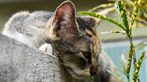 Фото Кошка Вблизи Головы Животные
