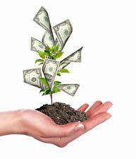 Картинки Оригинальные Деньги Купюры Белый фон Руки Деревья Почва