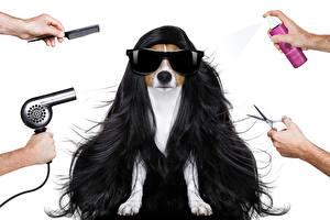 Картинки Собака Белый фон Волос Очки Джек-рассел-терьер Руки Фен Животные