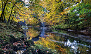 Фотографии Англия Парки Осень Реки Мох Dartmoor Природа