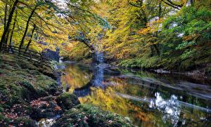 Фотографии Англия Парк Осень Реки Мох Dartmoor Природа