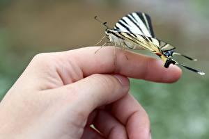 Фотография Пальцы Бабочка Вблизи Рука Природа