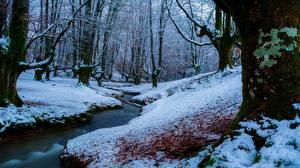 Фото Леса Ручей Снег Деревьев Природа