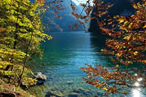 Фотография Германия Озеро Осенние Камень Ветвь Konigsee