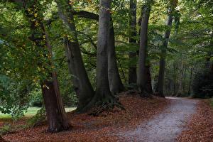 Фото Нидерланды Парки Осенние Деревья Листва Graaveland Природа