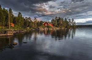 Обои Норвегия Речка Лес Дома Ringerike Природа