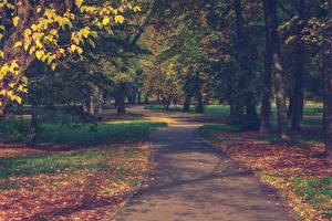 Картинка Парки Осенние Листва Деревья Тротуар Природа