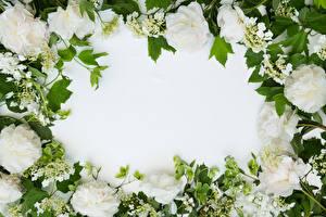 картинки на рабочий стол на весь экран цветы самые красивые живые обои тюльпаны спб официальный сайт вклады 2020 год