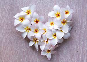 Картинки Плюмерия День святого Валентина Сердце Белый Цветы
