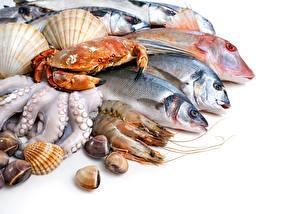 Обои Морепродукты Рыба Креветки Крабы Белым фоном