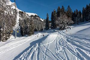 Картинка Швейцария Зимние Леса Снег Braunwald Природа