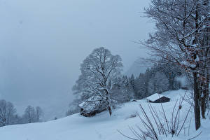 Картинка Швейцария Зимние Здания Снег Дерева Braunwald Природа