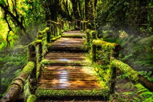 Картинка Таиланд Парк Мосты Тропический Мха Doi Inthanon National Park Природа