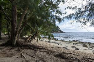 Картинка Тропический Берег Пальма Пляже Police Beach Seychelles Природа