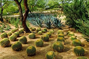 Фотографии Штаты Кактусы Сады Sunnylands Rancho Mirage Природа