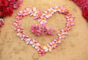 Фотографии День всех влюблённых Плюмерия Сердечко Цветы