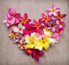 Обои День святого Валентина Плюмерия Сердечко Дизайн Цветы
