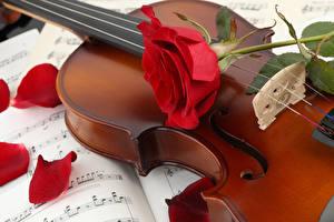 Обои Скрипки Розы Лепестки Цветы