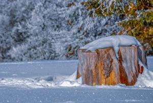 Фотография Зима Пень Снег Природа