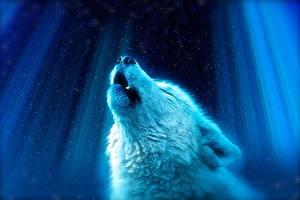 Картинки Волки Голова Животные