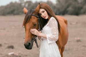 Фото Азиаты Лошади Шатенка Девушки Животные