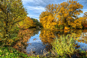 Фотографии Осень Реки Дерево Park Ekaterinhof Природа
