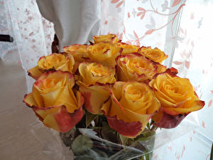 Фото Букет Роза Желтая цветок