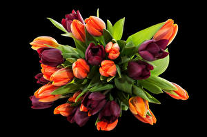 Картинки Букеты Тюльпаны Черный фон Цветы