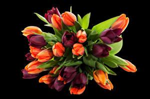 Картинки Букеты Тюльпаны Черный фон