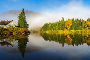 Фотография Канада Осенние Озеро Леса Квебек Ель Природа