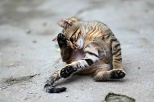 Фото Коты Котята Лапы