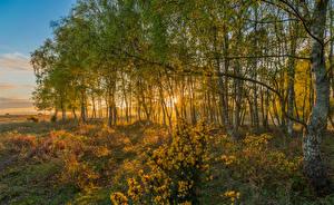 Картинки Англия Парки Осень Деревья Rockford New Forest National Park Природа