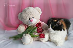 Фотографии Праздники 8 марта Коты Тюльпан Мишки Русские Три Красная цветок Животные