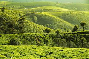 Обои Индия Поля Холмы Munnar