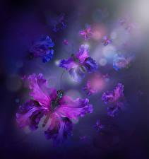 Фотографии Ирисы Бабочки Дизайн Цветы