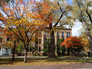 Фото Япония Дома Осенние Деревья Hokkaido University Sapporo город