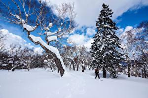 Картинки Япония Зимние Снег Деревья Ель Sapporo Hokkaido Природа