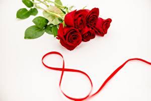 Картинки Международный женский день Розы Красный Цветы