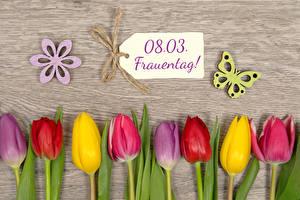 Фотография 8 марта Тюльпаны Бабочки Доски Немецкий Разноцветные цветок