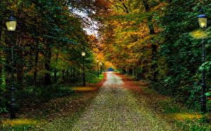 Фотография Нидерланды Осень Парки Деревья Уличные фонари Driebergen Utrecht Природа