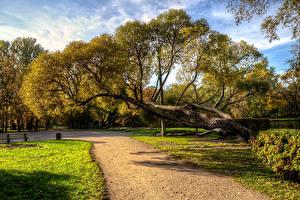 Фотография Россия Санкт-Петербург Осенние Парки Деревья Park Ekaterinhof