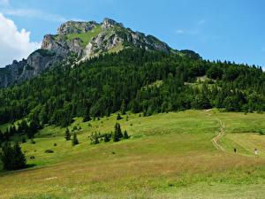 Фото Словакия Горы Леса Луга Tatras Природа