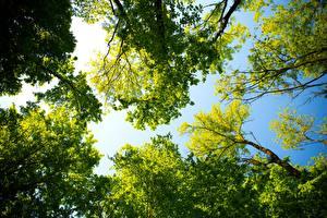Фото Лето Деревья Вид снизу