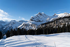 Фотография Швейцария Горы Зимние Леса Альпы Снег Braunwald Canton of Glarus Природа