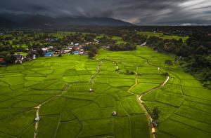 Картинка Таиланд Тропики Поля Здания Леса Phuket