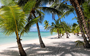 Фотографии Тропики Берег Пальмы Песке Пляже Bahamas Природа